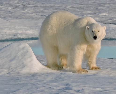 Arctic_Svalbard_26